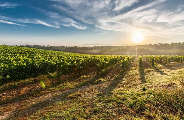 Vigne et paysage